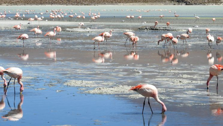 Grupo de flamencos en laguna
